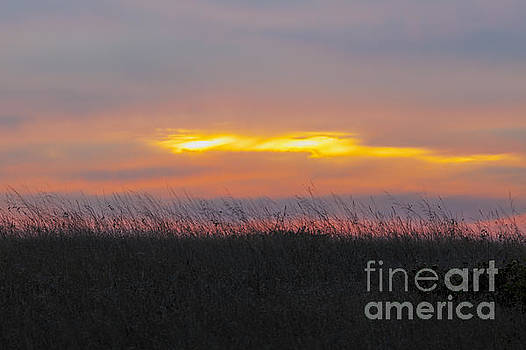 Grasses Against Sunset Colors by Sharon Foelz