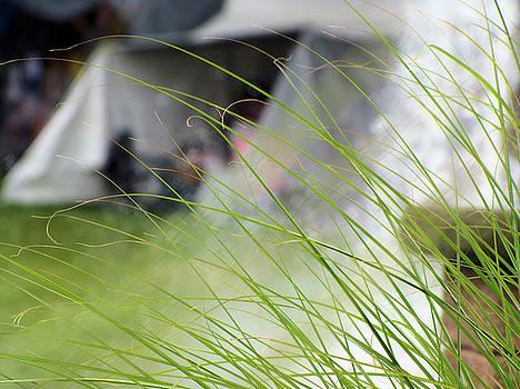 Grasses by Deb Ingram
