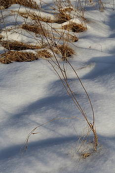 Grasses In Winter by David Hand