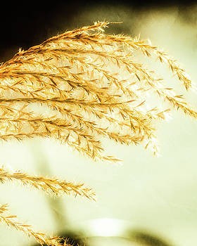 Grasses of Gold by Donna Lee