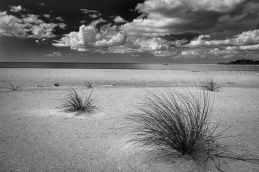 Rick Strobaugh - Grasses on the Beach