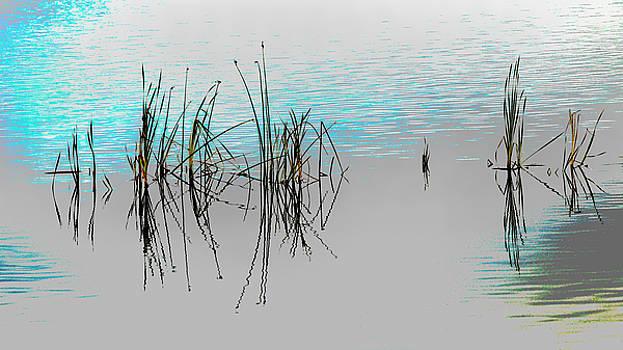 Rick Strobaugh - Grasses Reflecting