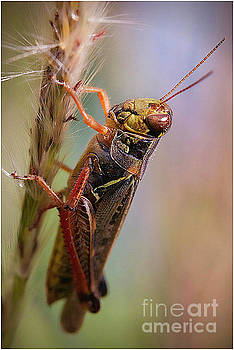 Grasshopper 5 by Jim Wright