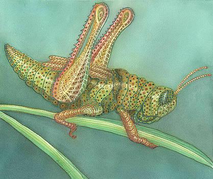 Grasshopper by Anne Havard