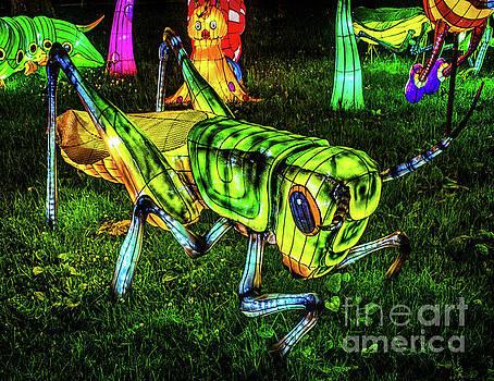Grasshopper - Chinese Lantern by Nick Zelinsky