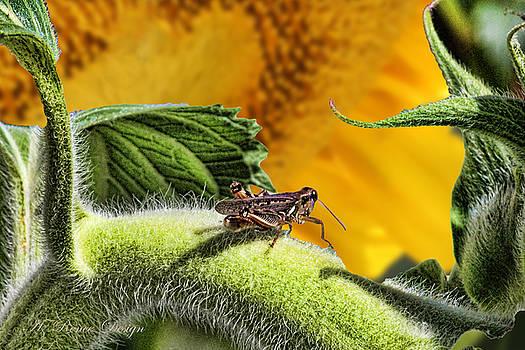 Grasshopper In Sun by Renee Marie Martinez