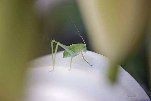 Grasshopper by Lisa Gabrius