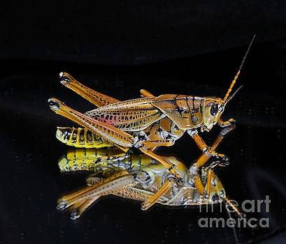 Grasshopper Reflected by Dodie Ulery