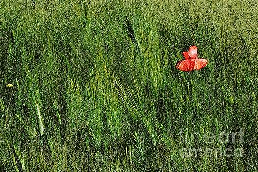 Grassland and Red Poppy Flower 2 by Jean Bernard Roussilhe