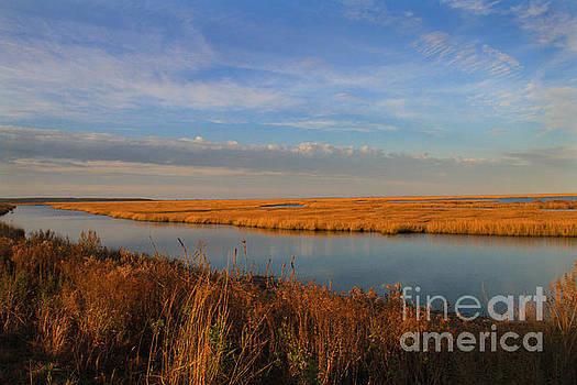 Grassland of New Jersey by Roger Becker