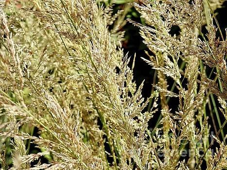 Grasslands by Ella Kaye Dickey