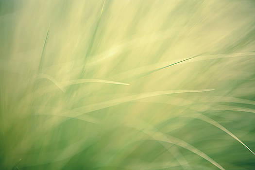 Grassy Daydreams by Debi Bishop
