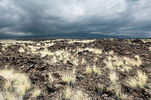 Grassy Lava Field by Joe Belanger