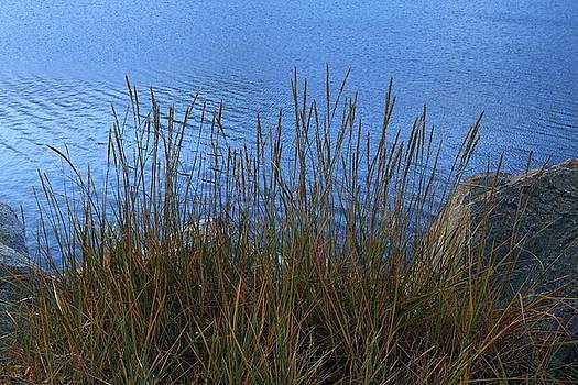 Grassy Shore by Kimberly VanNostrand
