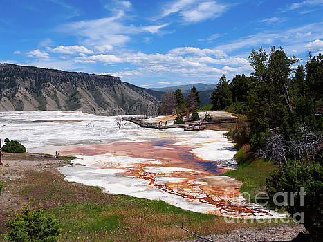 Grassy Spring at Mammoth Hot Springs Yellowstone National Park by Louise Heusinkveld