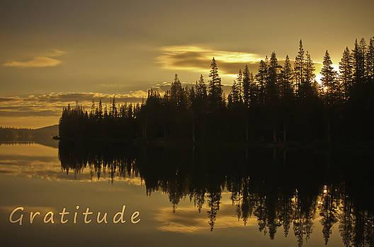 Gratitude by Sherri Meyer