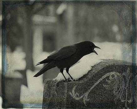 Gothicrow Images - Cawing Crow In The Dark Of Winter