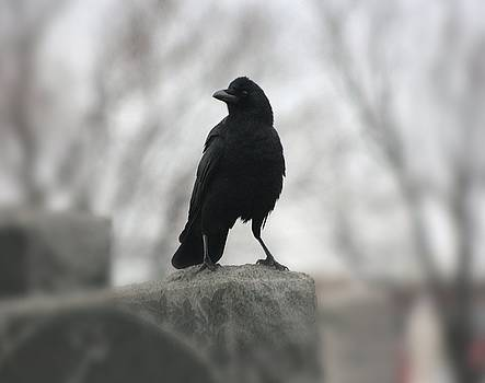 Gothicrow Images - Misted Graveyard Raven Blur