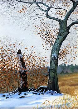 Gray Day Beech by Phil Chadwick