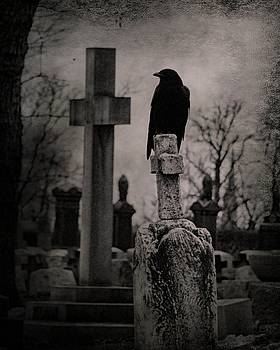 Gray Day Crow by Gothicrow Images