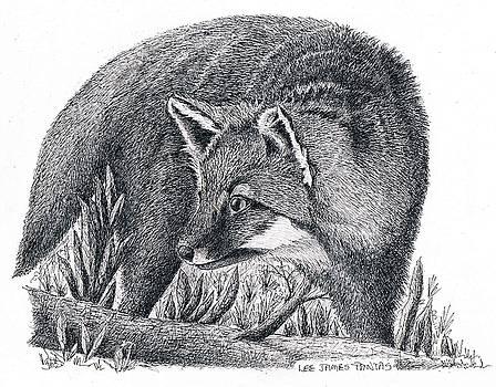 Lee Pantas - Gray Fox