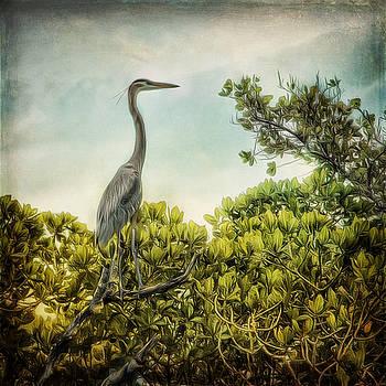 Gray Herron in the Wetlands by Stella Oliver