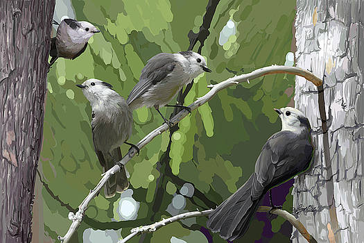 Gray Jays Group by Pam Little
