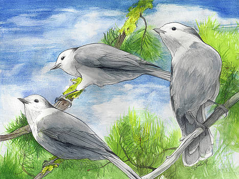 Gray Jays Trio by Pam Little