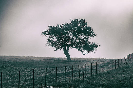 Gray Sky Morning by Mike Trueblood