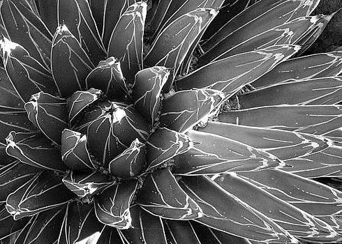 Gray Starburst by Sandy Fisher