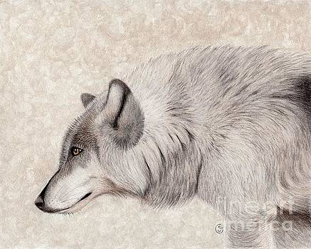 Gray Timber Wolf - On the Prowl by Sherry Goeben