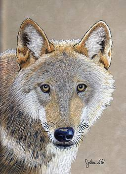Gray Wolf by Jolene Stinson Williams