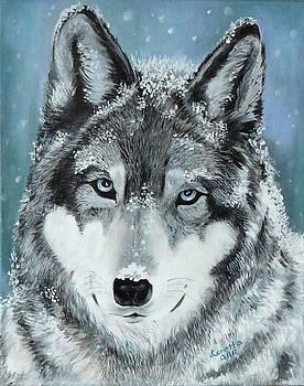 Gray Wolf by Loretta Orr