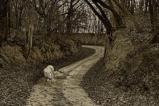 Nikolyn McDonald - Gray Wolf - On the Road