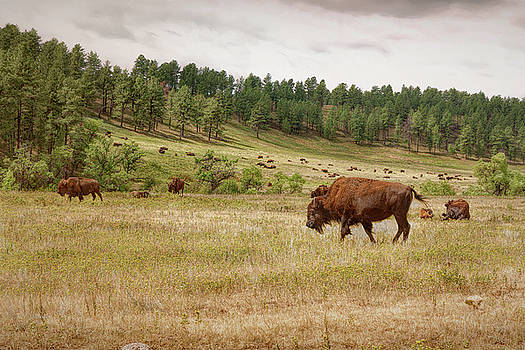 Grazing and Relaxing by John M Bailey