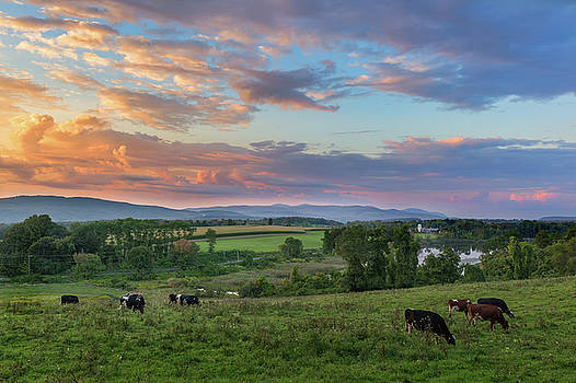 Grazing at Sunset by Bill Wakeley