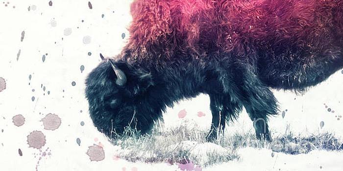Grazing Bison by Priska Wettstein