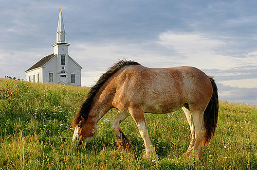 Reimar Gaertner - Grazing Clydesdale horse and church at Highland Village Museum a