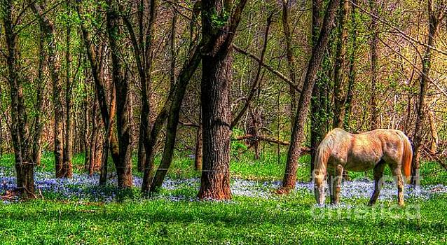 Grazing Horse by Denny Ragan