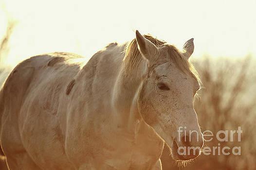 Dimitar Hristov - Grazing Horse