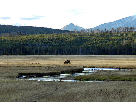 Grazing in Yellowstone by Sarah Egan