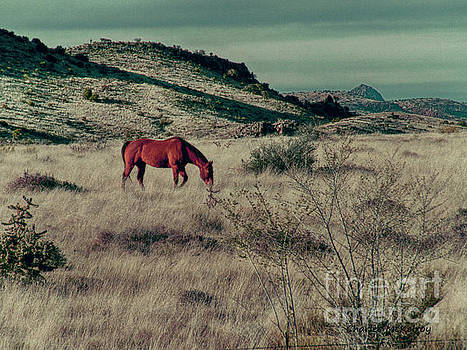 Grazing Solo by Charles McKelroy
