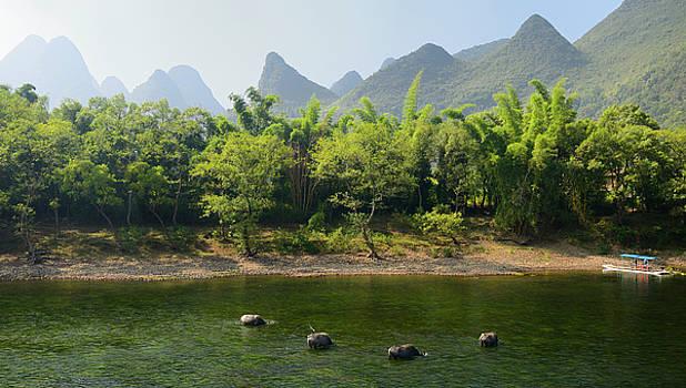 Reimar Gaertner - Grazing Water Buffalo in Li River Guangxi province China with ka