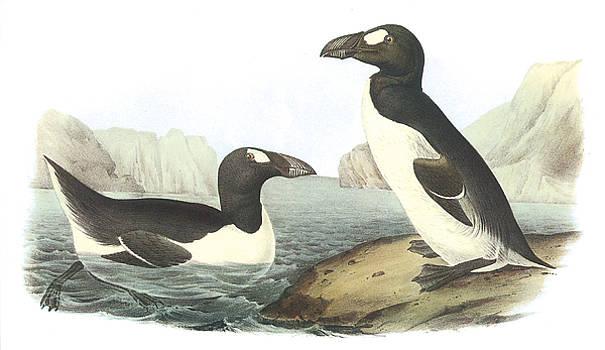 John James Audubon - Great Auk