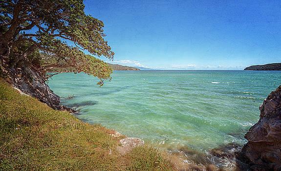 Great Barrier Island New Zealand Coastal View by Joan Carroll