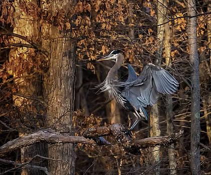 Great Blue by James Figielski by Paulinskill River Photography
