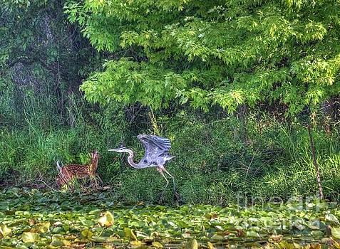 Great Blue Heron and Doe by Denny Ragan