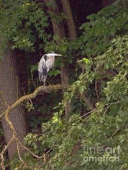 Great Blue Heron At Rivers Edge        Vertical          Indiana by Rory Cubel