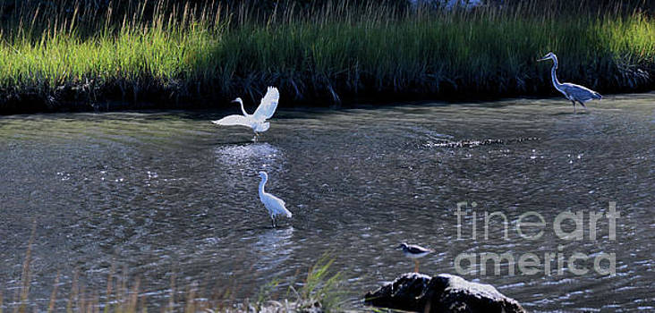 Sandra Huston - Great Blue Heron Fishing Lesson