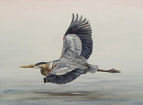Great Blue Heron Flying by Laurie Tietjen